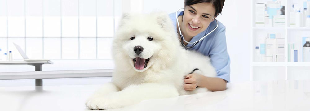 happy dog with vet